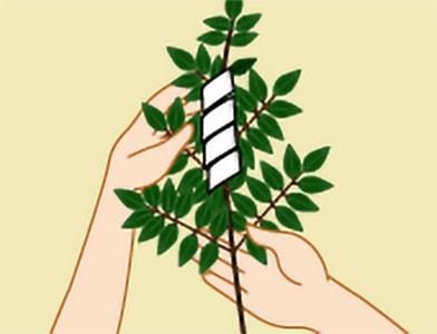 玉串奉奠の作法|手順2